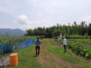 しゅうたの畑